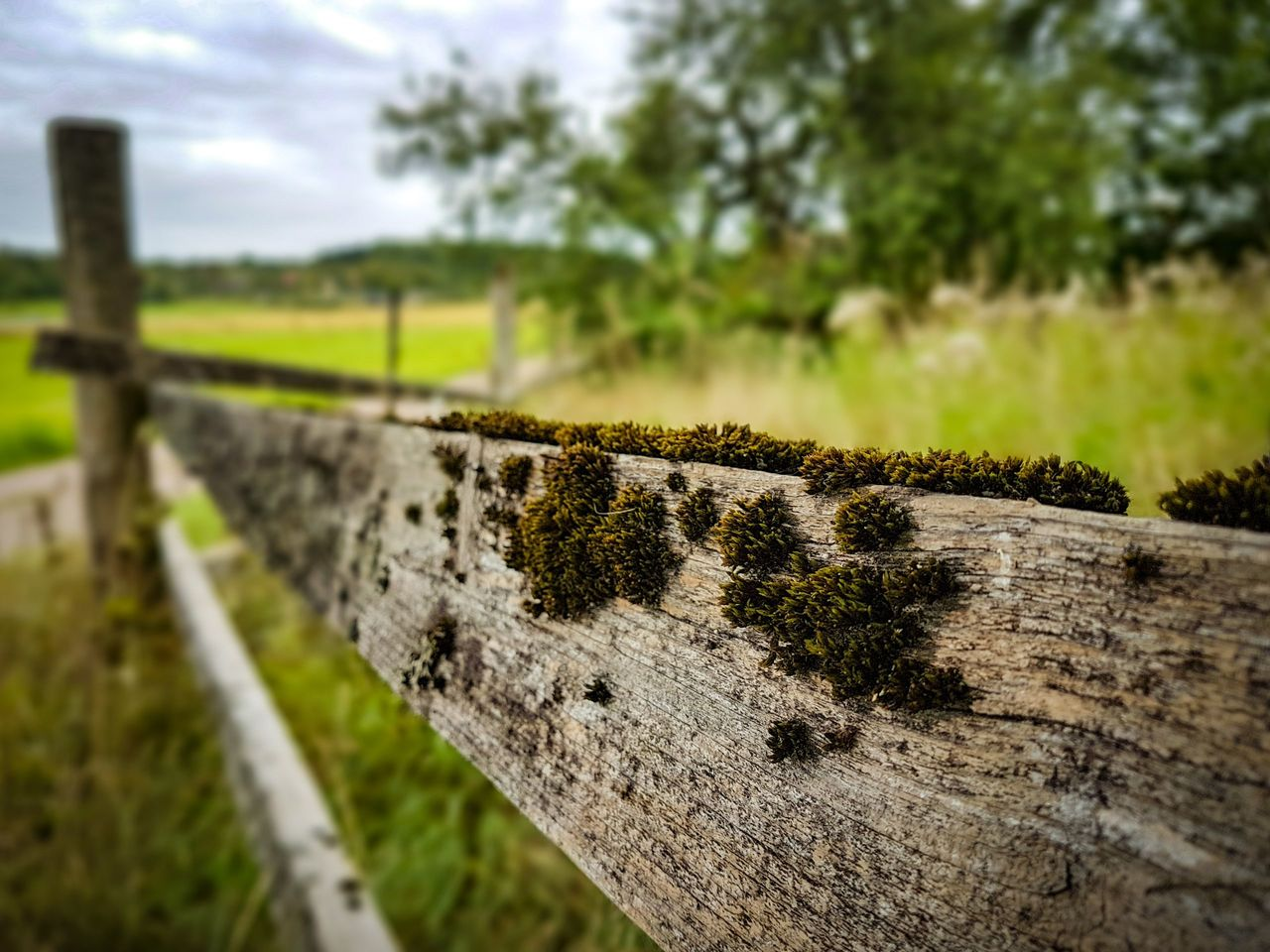 plant, wood - material, close-up, no people, day, focus on foreground, tree, nature, barrier, boundary, selective focus, outdoors, land, field, railing, fence, green color, weathered, safety, agriculture, bark