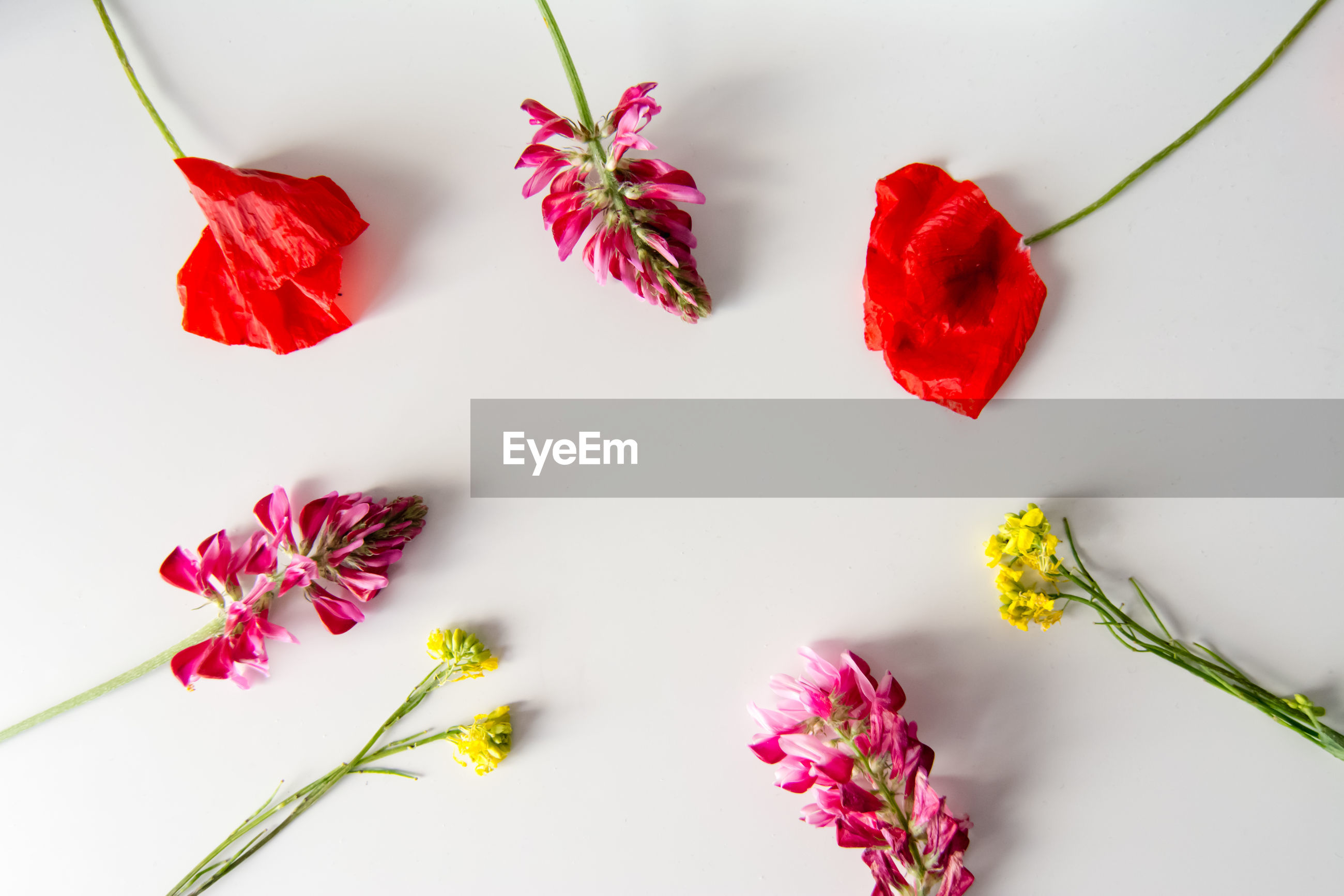 High angle view of flowers on white background