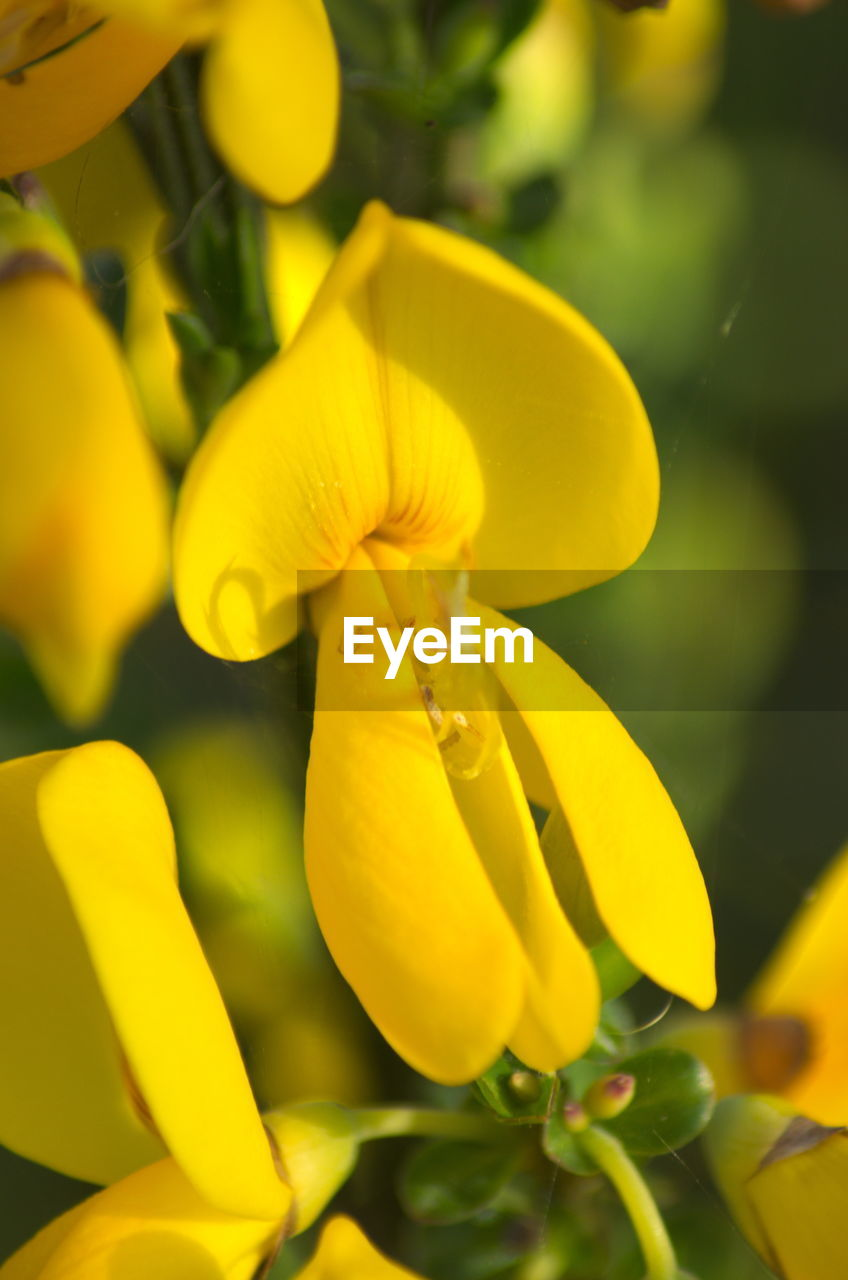 yellow, beauty in nature, flower, fragility, nature, petal, growth, freshness, close-up, no people, plant, outdoors, day, blooming, flower head