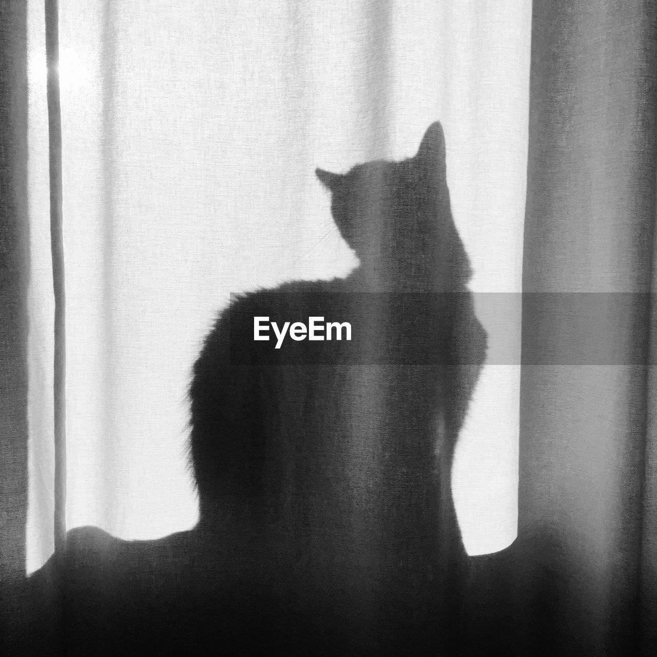 Shadow Of Cat On Curtain