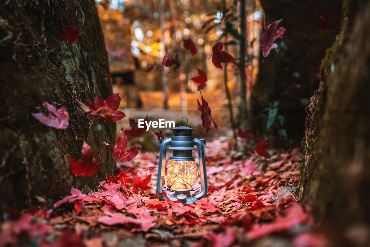 tree, selective focus, lighting equipment, nature, plant, no people, trunk, tree trunk, autumn, glass - material, illuminated, lantern, close-up, outdoors, land, focus on foreground, plant part, leaf, change, glowing, electric lamp