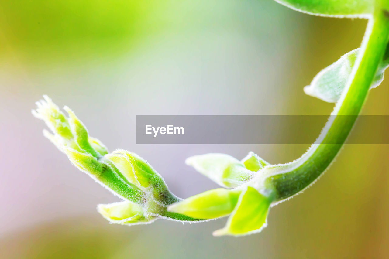 green color, close-up, plant, growth, leaf, plant part, no people, beauty in nature, nature, selective focus, fragility, vulnerability, freshness, day, beginnings, tendril, outdoors, spiral, focus on foreground, new life