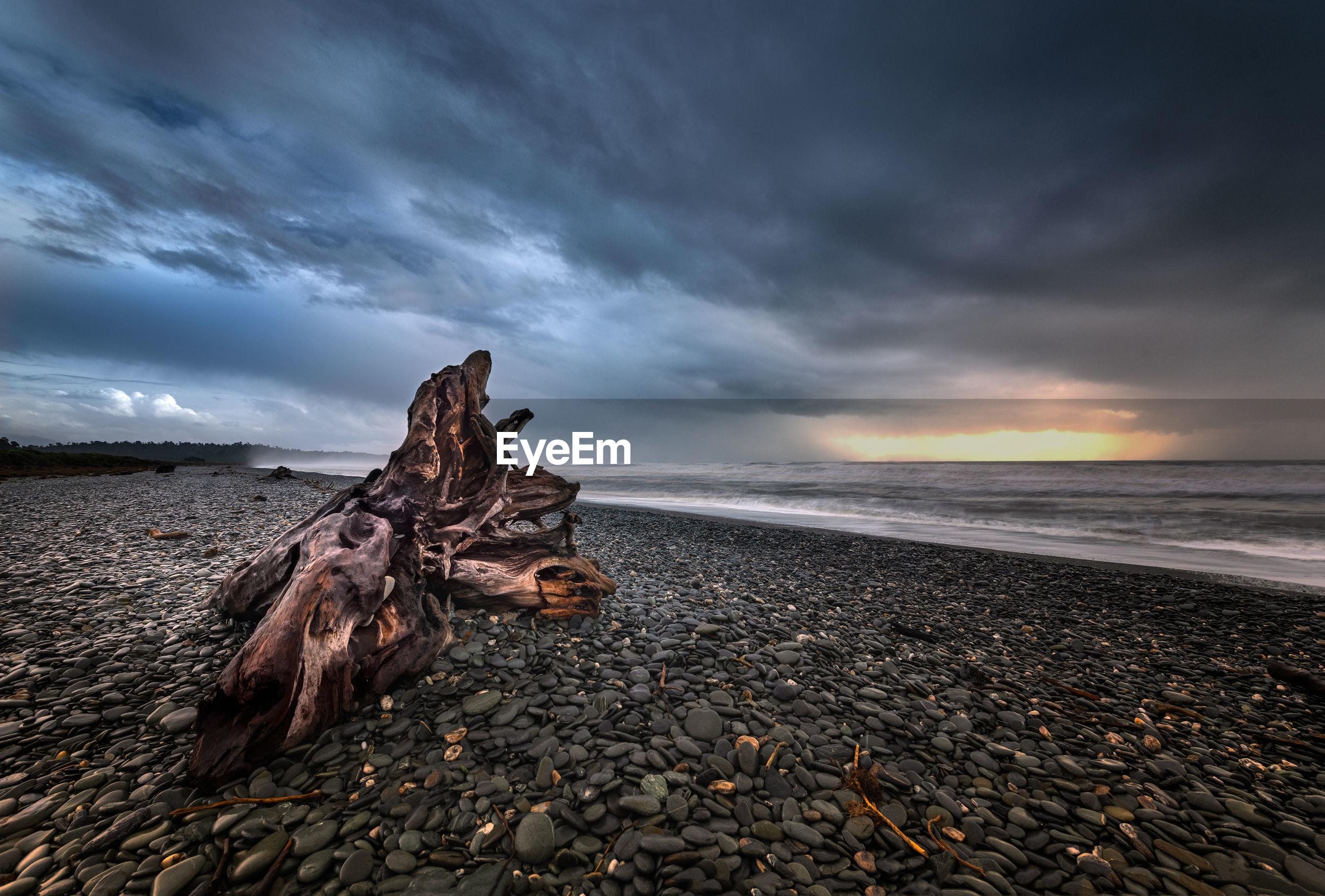 DRIFTWOOD ON BEACH