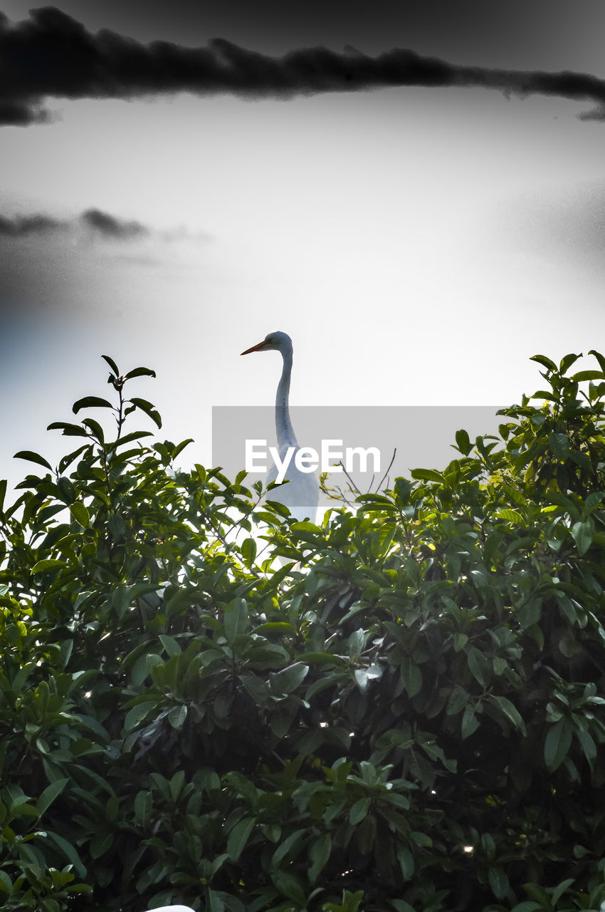 animal themes, vertebrate, animals in the wild, animal wildlife, animal, bird, one animal, plant, nature, sky, green color, no people, day, growth, beauty in nature, leaf, plant part, tree, water, outdoors, animal neck