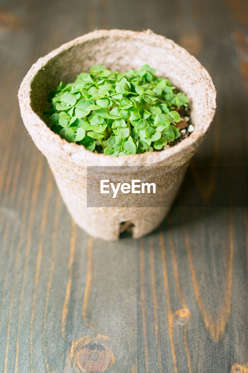 table, wood - material, green color, no people, close-up, focus on foreground, food and drink, high angle view, food, indoors, still life, day, freshness, wellbeing, healthy eating, ready-to-eat, leaf, nature, bowl