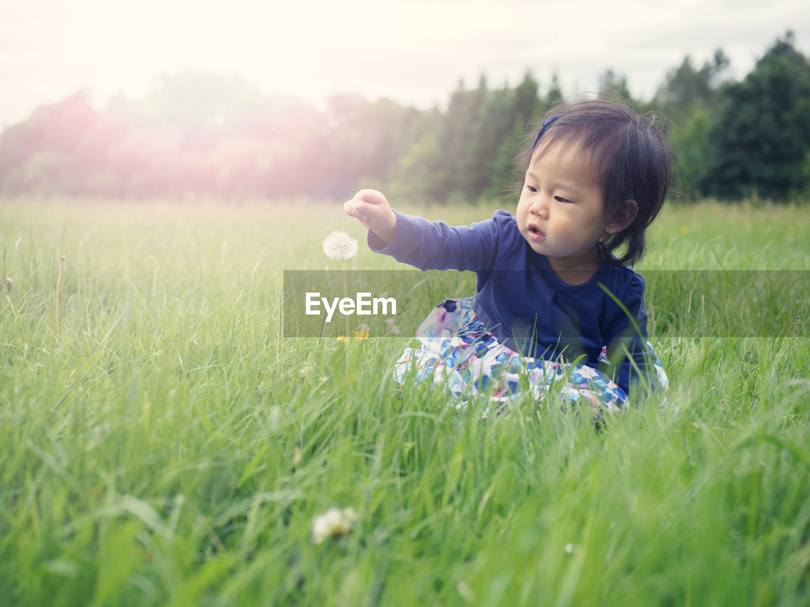 Baby girl reaching towards dandelion growing on grassy field