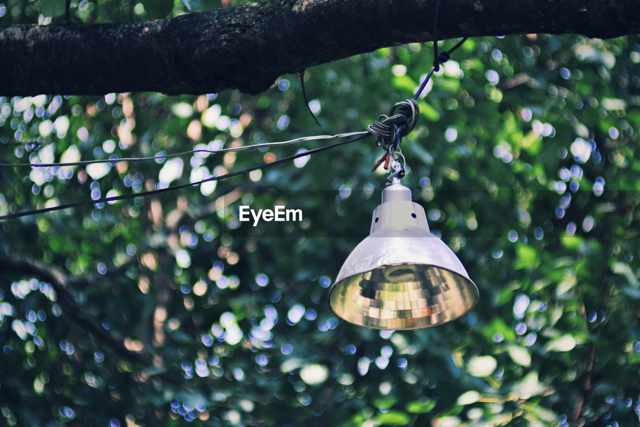 hanging, focus on foreground, tree, no people, plant, close-up, day, outdoors, low angle view, nature, decoration, growth, lighting equipment, branch, selective focus, electricity, string, bell, cable