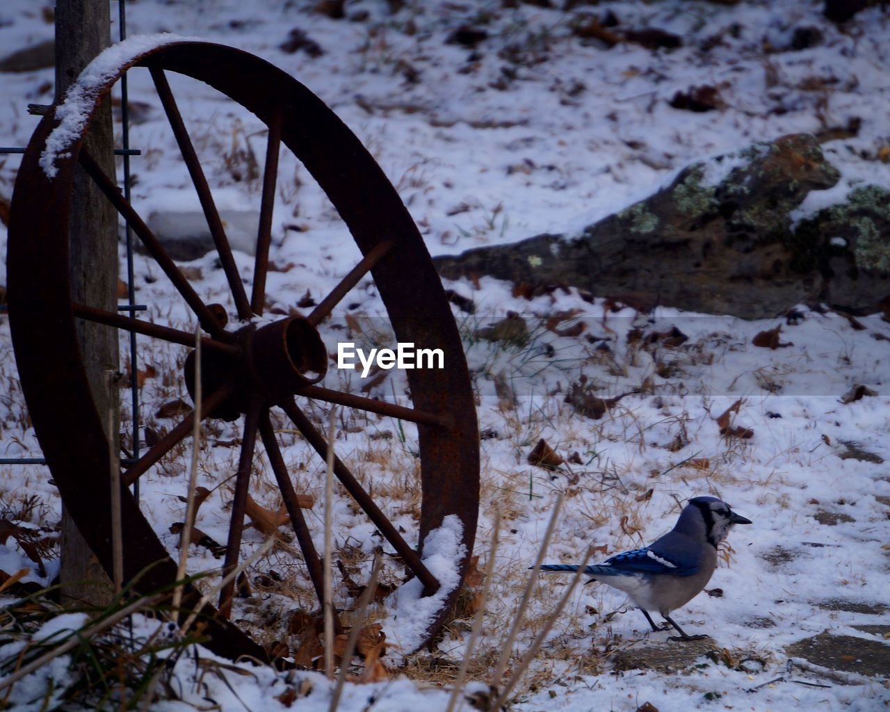 Close-Up Of Bird On Ground During Winter