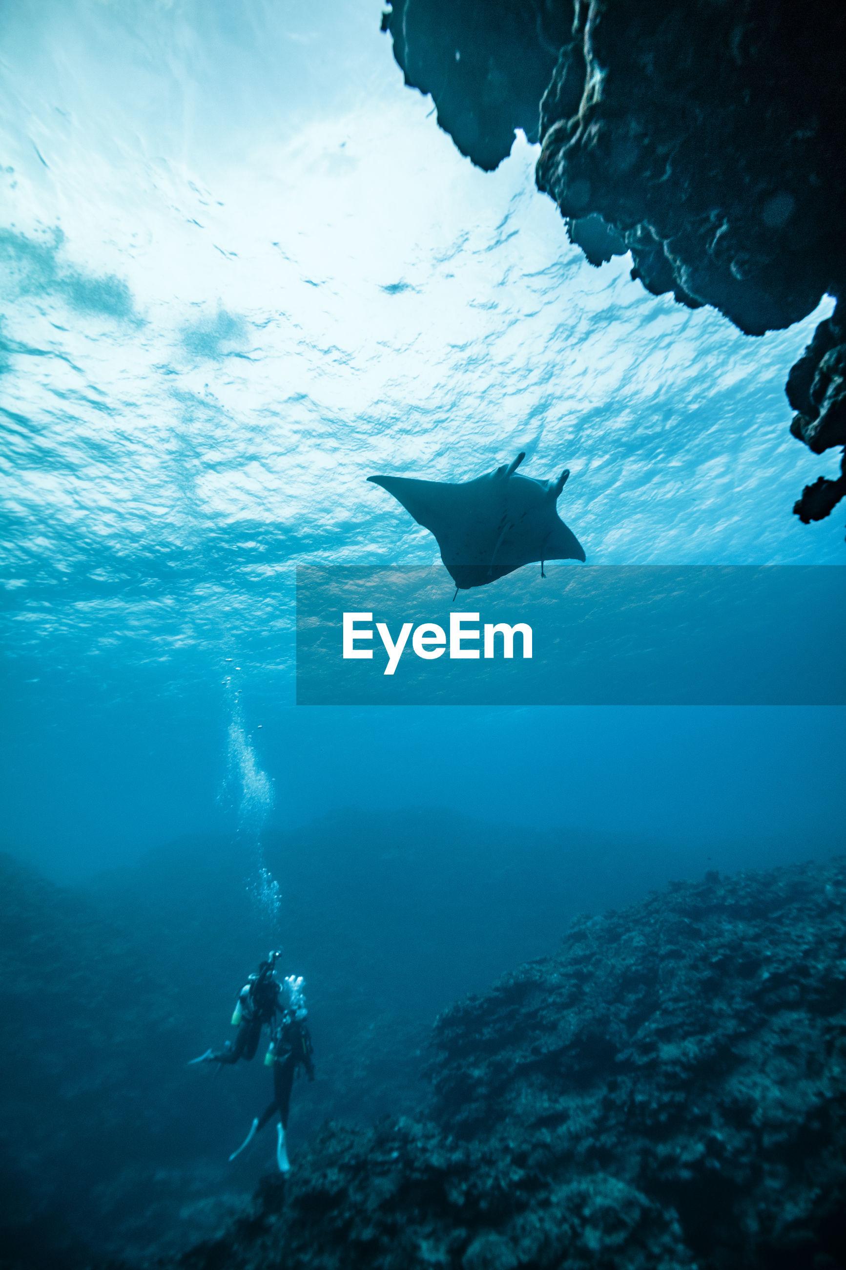 View of scuba diver in sea