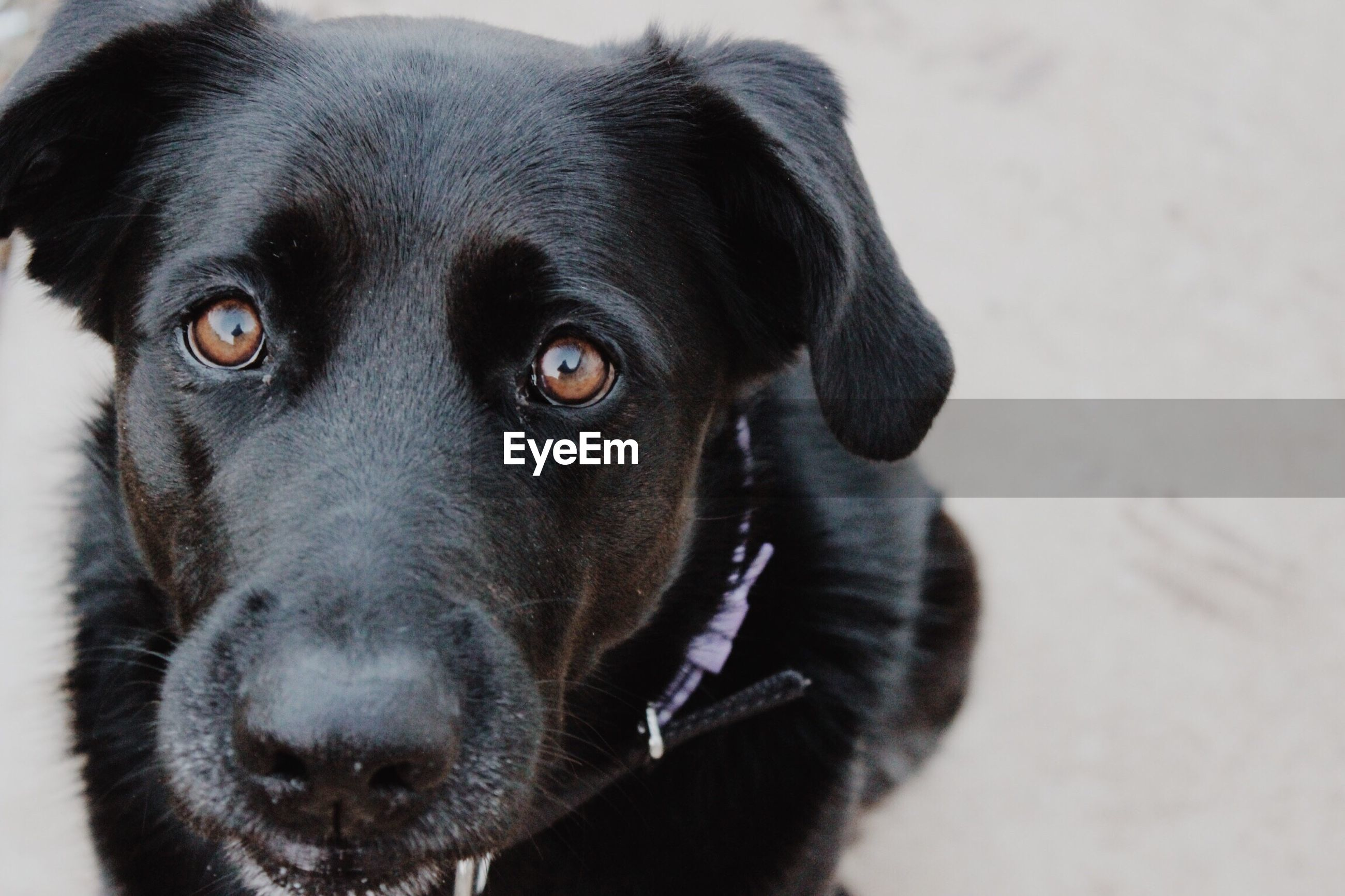 dog, pets, one animal, domestic animals, black color, mammal, portrait, animal themes, looking at camera, close-up, focus on foreground, no people, outdoors, day