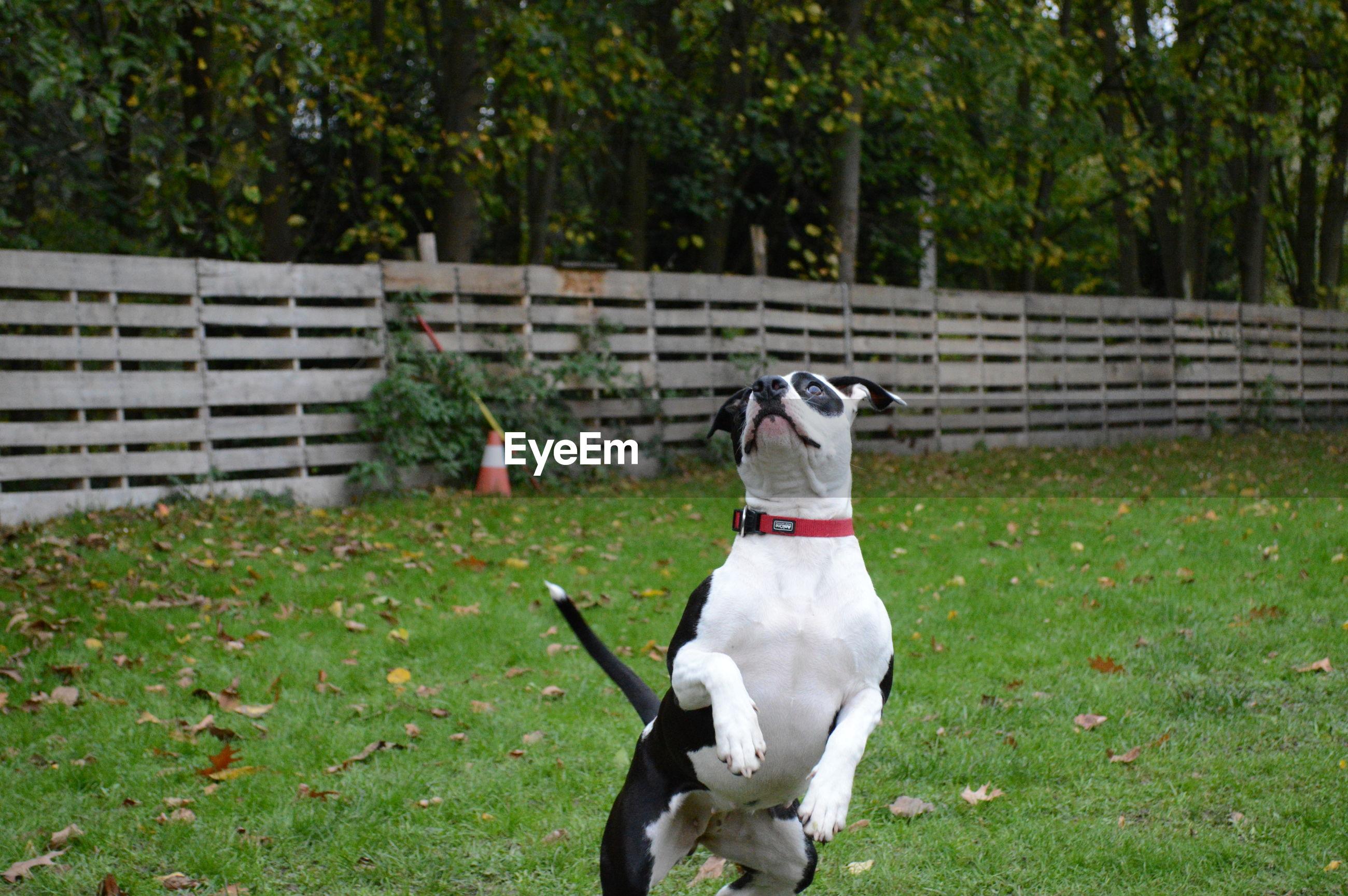 DOG SITTING ON FIELD
