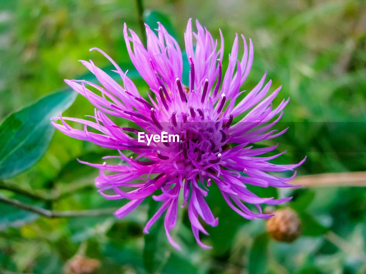 flower, nature, growth, beauty in nature, fragility, petal, plant, freshness, flower head, focus on foreground, close-up, outdoors, no people, day, blooming