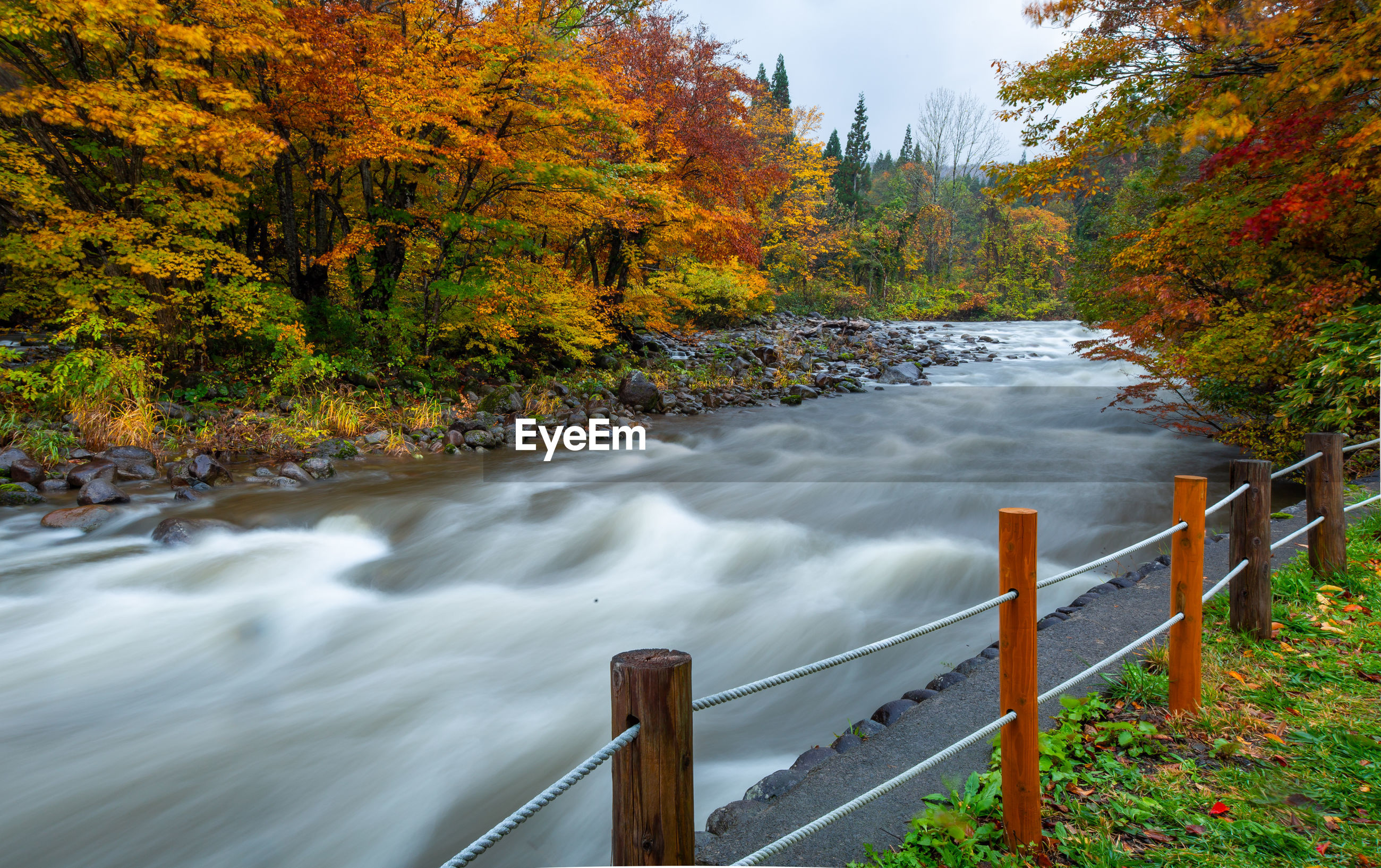 SCENIC VIEW OF RIVER FLOWING AMIDST TREES DURING AUTUMN