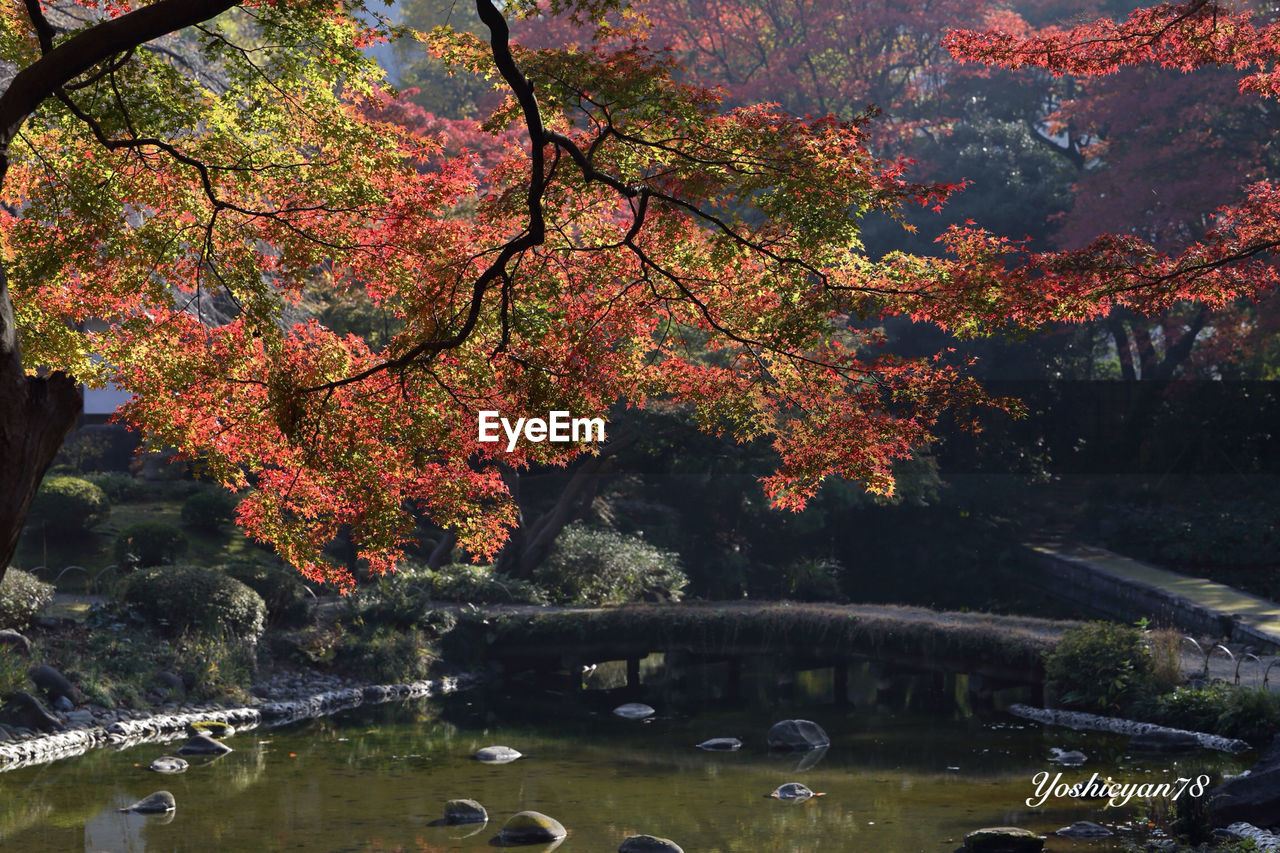 tree, water, nature, beauty in nature, autumn, growth, lake, reflection, day, bridge - man made structure, tranquility, no people, outdoors, scenics, branch, change, leaf, park - man made space, flower, architecture, fragility, sky