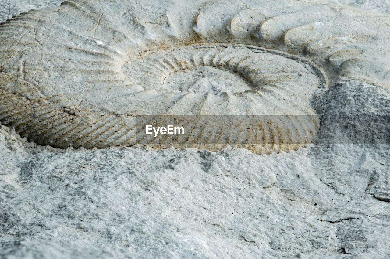 fossil, nature, solid, no people, animal wildlife, ancient, animal, close-up, rock - object, rock, animal themes, animals in the wild, extinct, history, sea, geology, animal shell, evolution, shell, marine, paleontology, outdoors, archaeology