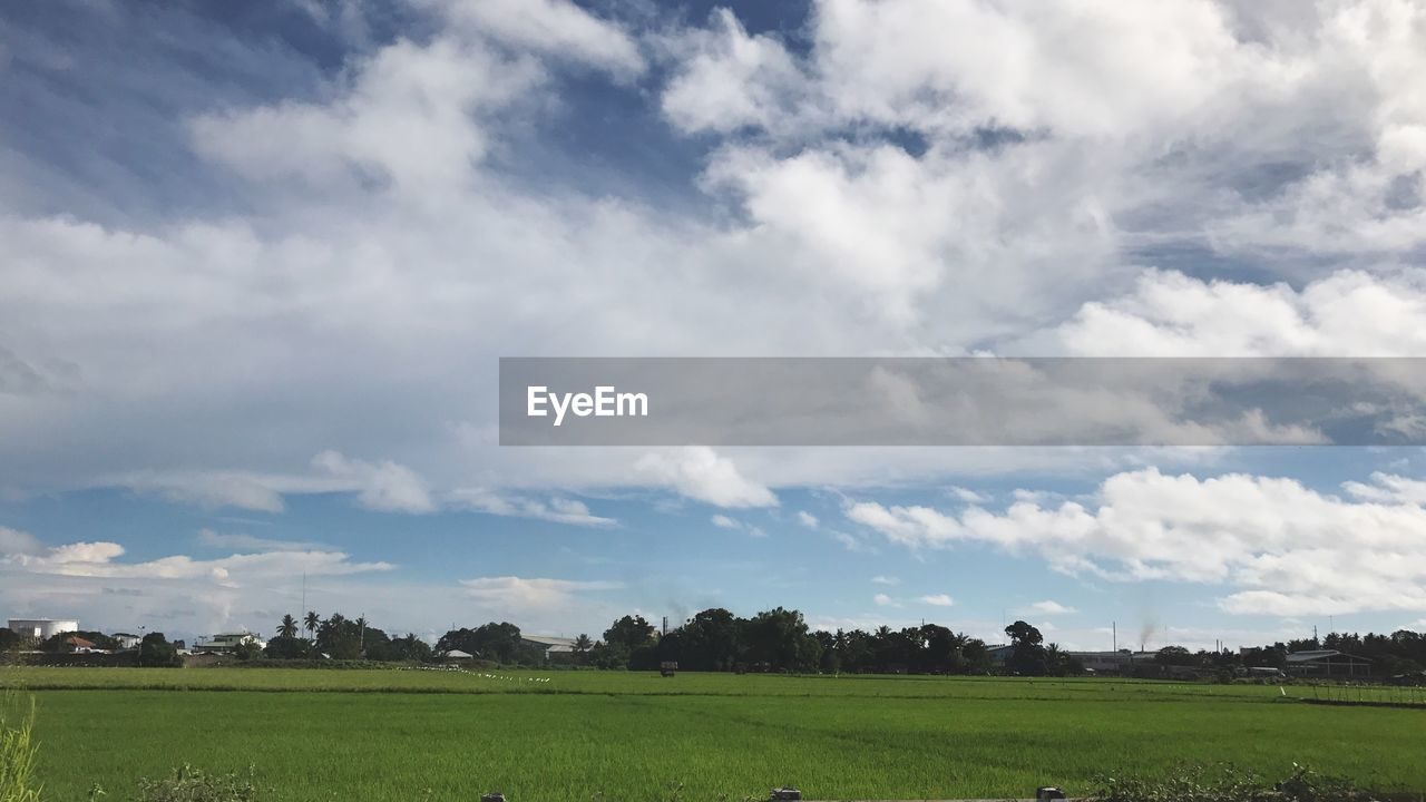field, cloud - sky, beauty in nature, tranquil scene, nature, sky, tranquility, agriculture, tree, scenics, landscape, no people, grass, day, growth, outdoors, rural scene
