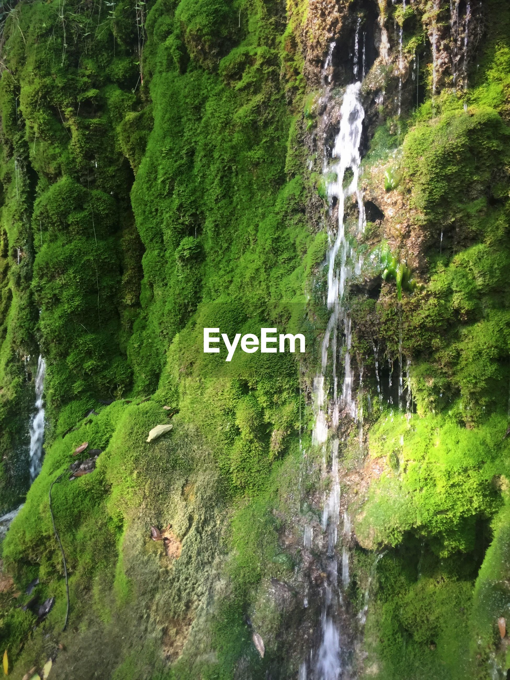 motion, water, waterfall, forest, tree, green color, scenics, nature, beauty in nature, growth, rock - object, tranquil scene, moss, environment, lush foliage, tranquility, non-urban scene, overgrown, plant, rock formation, green, stream, mountain, outdoors, flowing water, flowing, day, splashing, rock, park, woodland