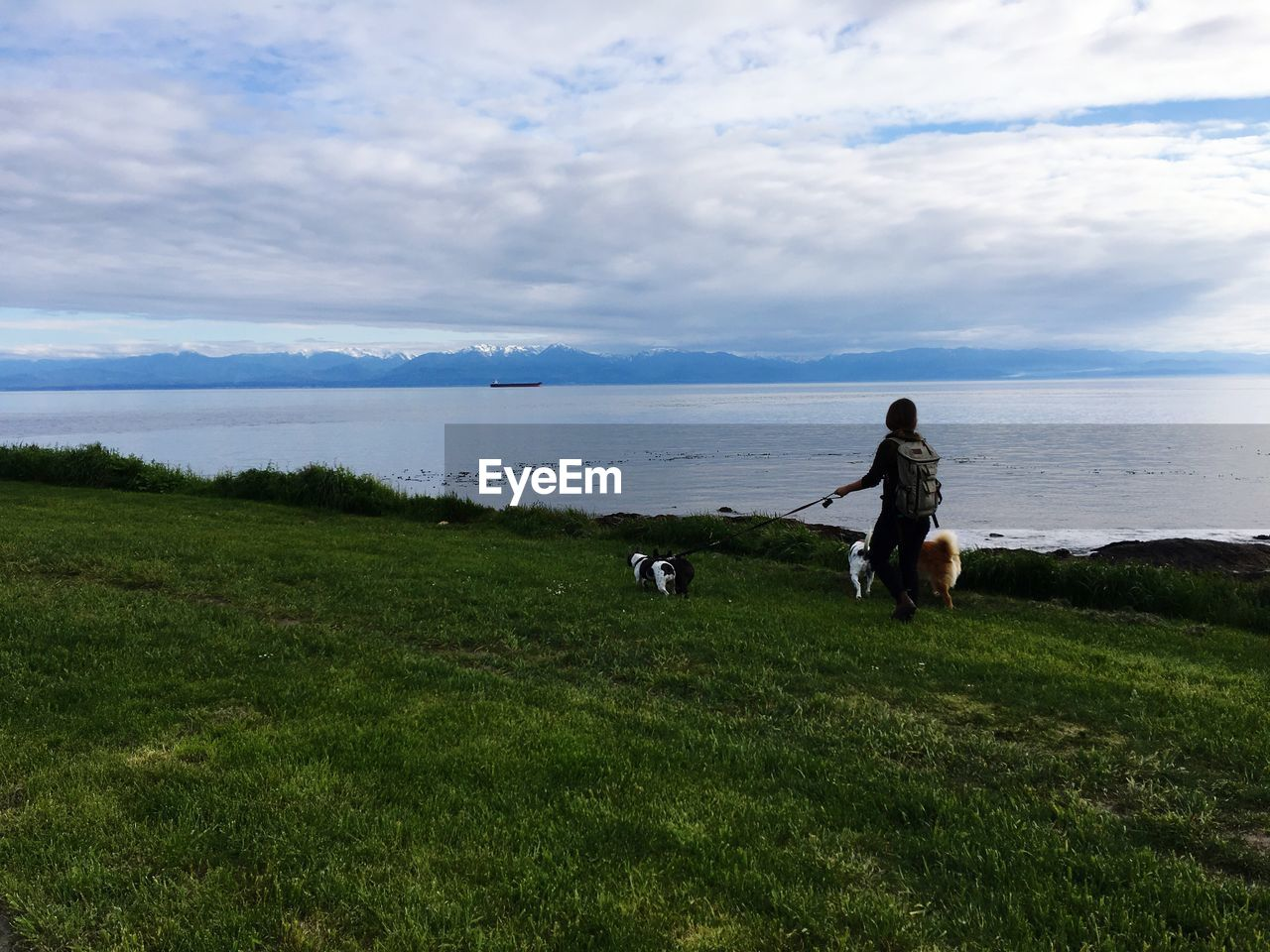 grass, pets, domestic, mammal, animal themes, sky, animal, cloud - sky, domestic animals, one animal, land, vertebrate, plant, water, dog, canine, nature, beauty in nature, field, real people, outdoors, horizon over water, pet owner