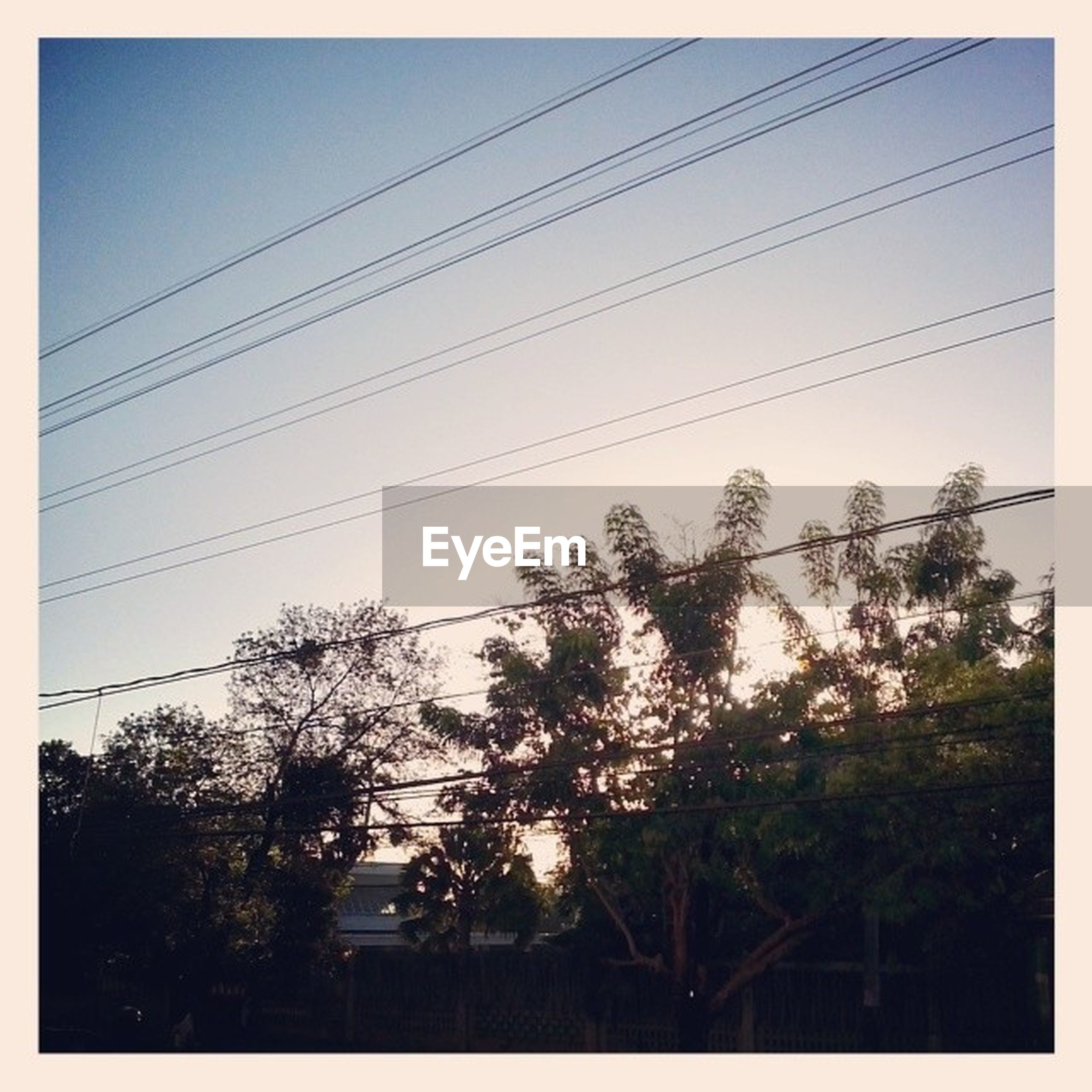 power line, transfer print, low angle view, electricity pylon, silhouette, electricity, auto post production filter, cable, tree, power supply, clear sky, sky, connection, power cable, sunset, nature, growth, outdoors, dusk, no people
