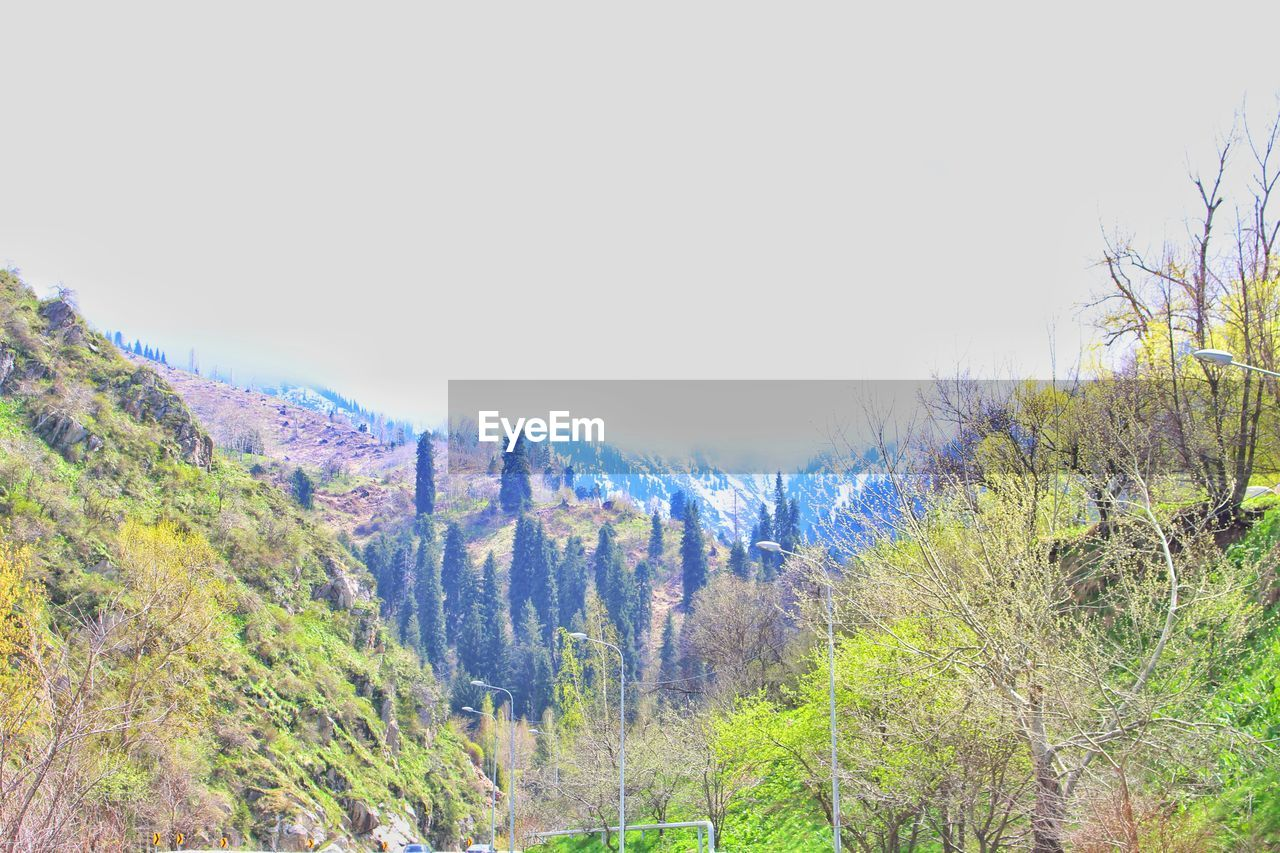 nature, tranquility, tranquil scene, scenics, tree, beauty in nature, no people, day, landscape, outdoors, growth, forest, plant, mountain, clear sky, grass, sky