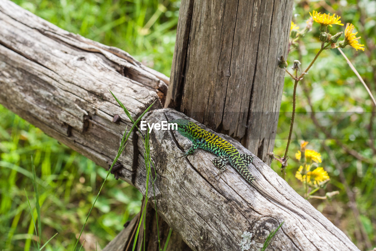 animal themes, tree, one animal, animal wildlife, animal, plant, animals in the wild, wood - material, no people, nature, reptile, vertebrate, outdoors, day, branch, tree trunk, trunk, lizard, forest, close-up, rainforest