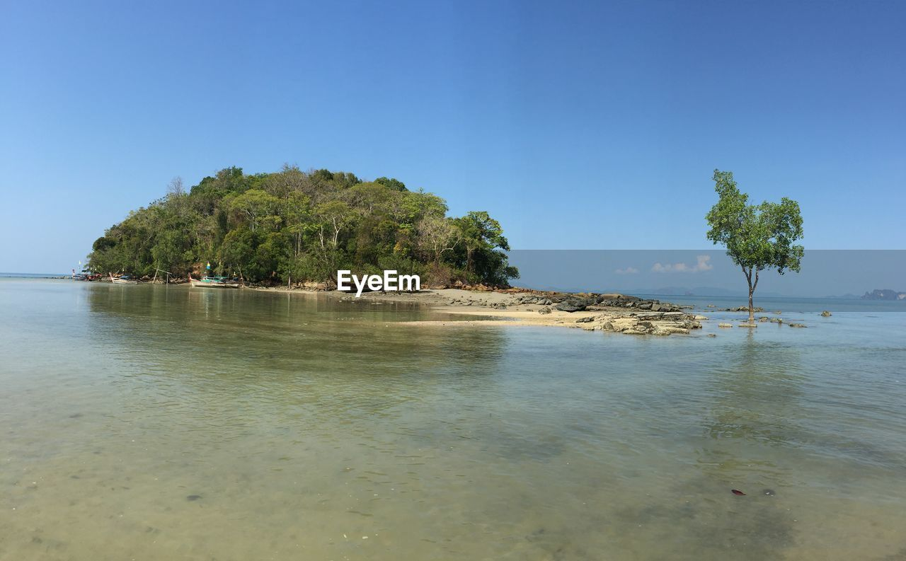 water, nature, tree, tranquility, sea, beauty in nature, scenics, tranquil scene, blue, outdoors, no people, beach, clear sky, sky, day