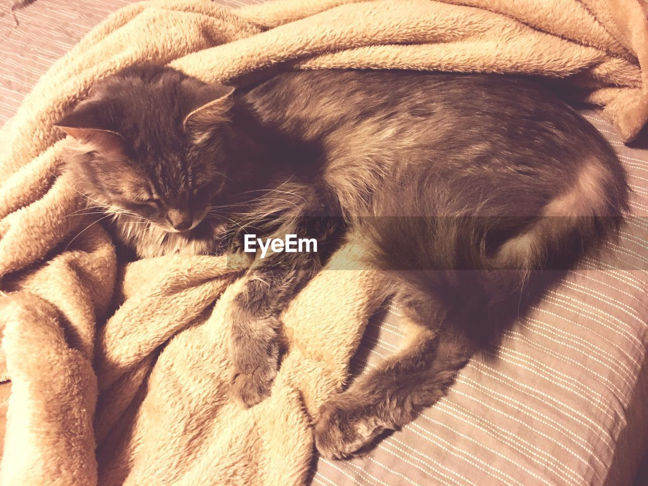 one animal, pets, animal themes, domestic animals, relaxation, domestic cat, indoors, mammal, sleeping, no people, feline, close-up, day