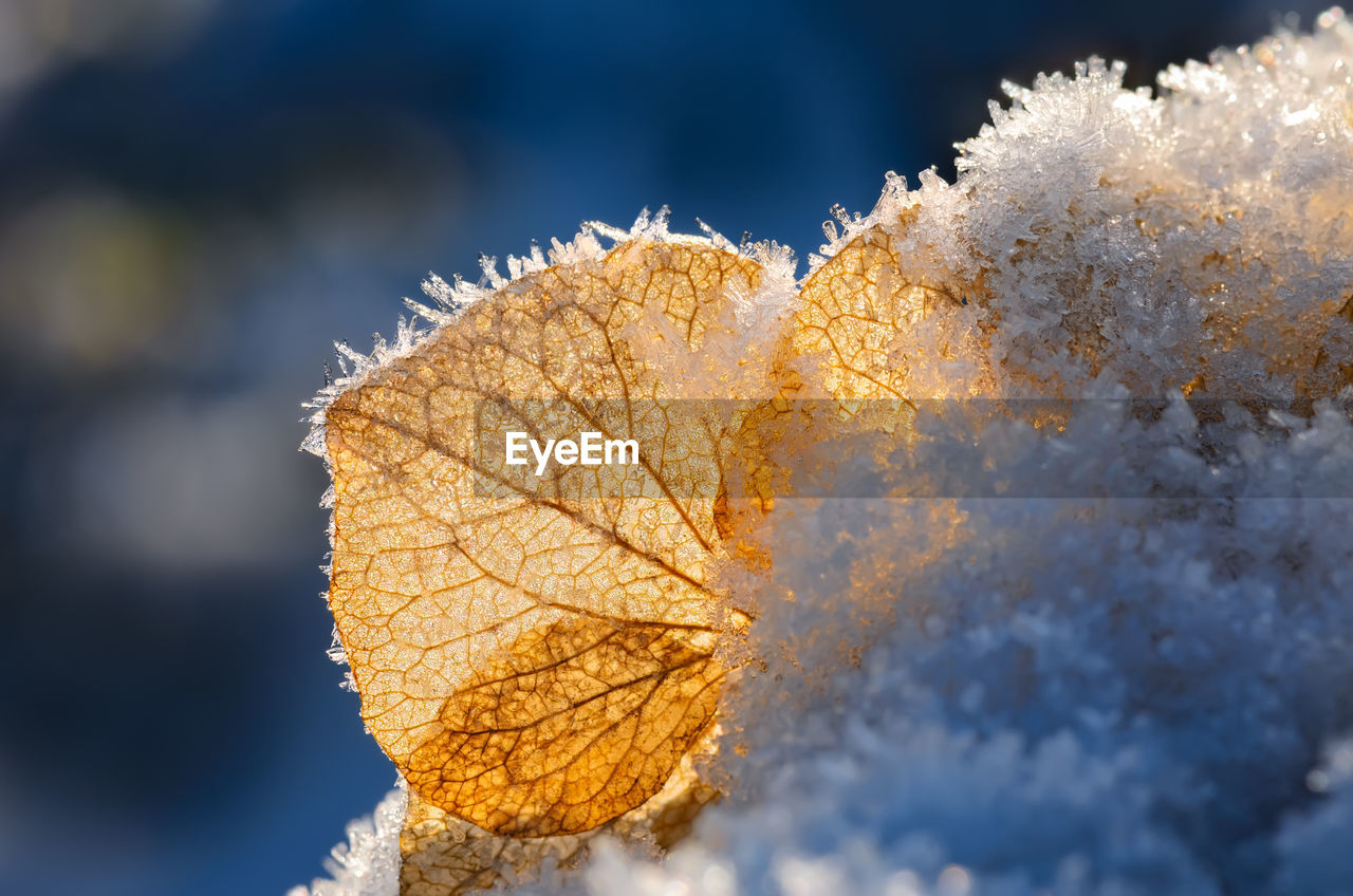 cold temperature, winter, leaf, close-up, plant part, snow, nature, frozen, autumn, change, beauty in nature, day, plant, selective focus, vulnerability, no people, fragility, ice, frost, outdoors, leaves, natural condition