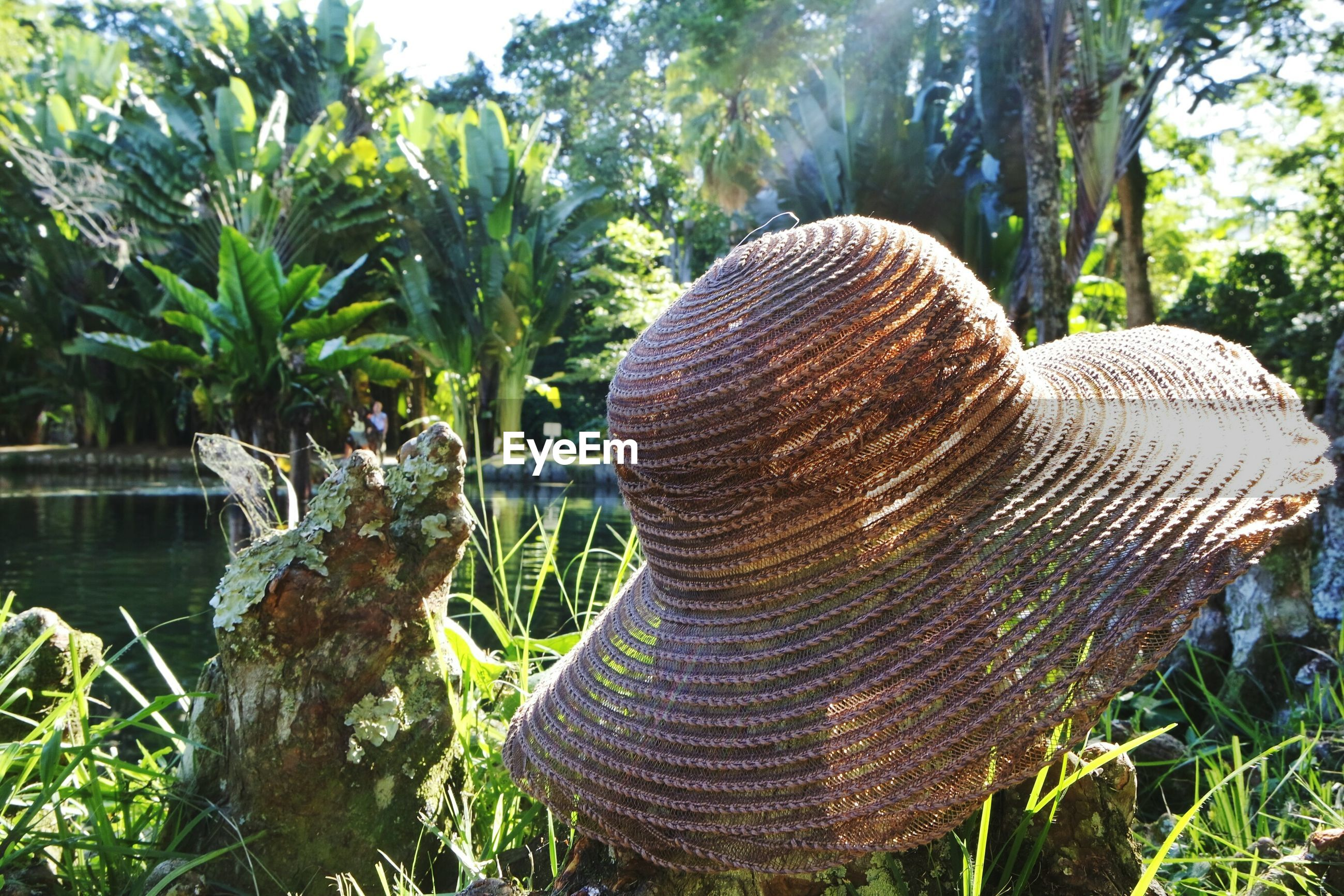 Close-up of hat on plants
