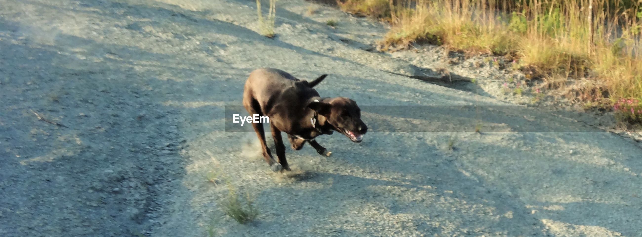 High angle view of dog running on sand