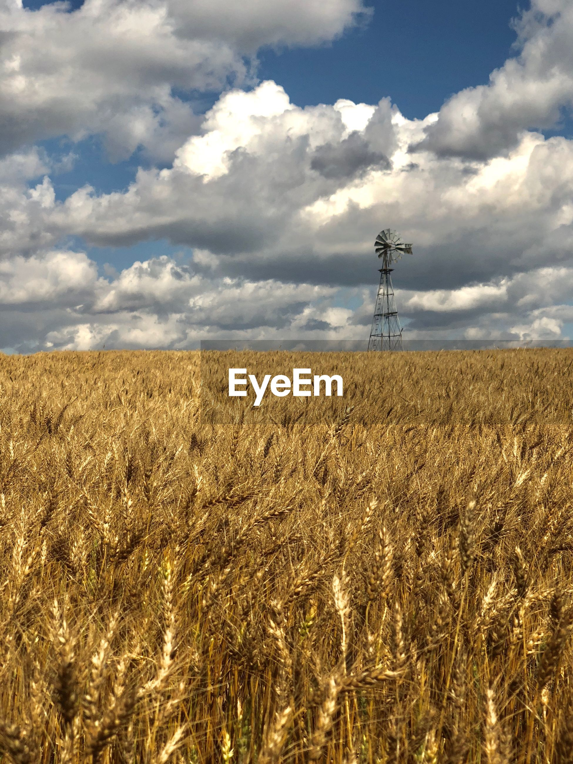 VIEW OF WHEAT FIELD AGAINST CLOUDY SKY
