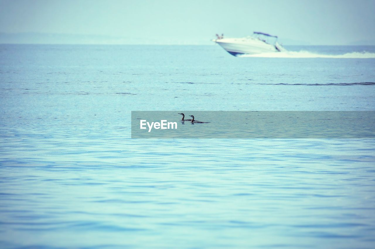 water, sea, nature, waterfront, beauty in nature, animals in the wild, animal themes, tranquility, horizon over water, day, animal wildlife, no people, outdoors, bird, flying, scenics, sky, swimming, swan