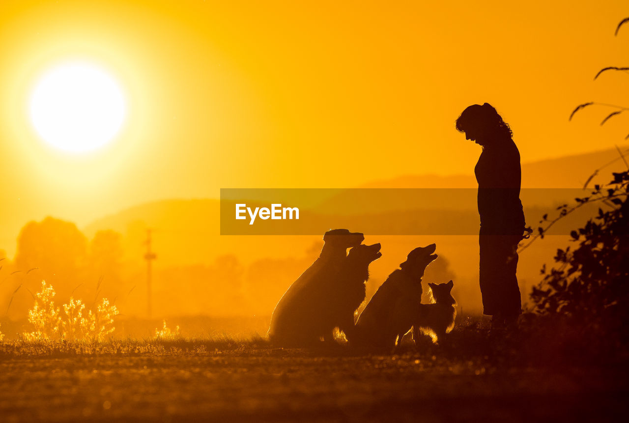 Silhouette mature woman with dogs standing on field against orange sky during sunset
