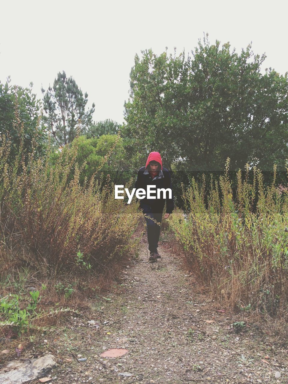 Full length of man walking in field against trees