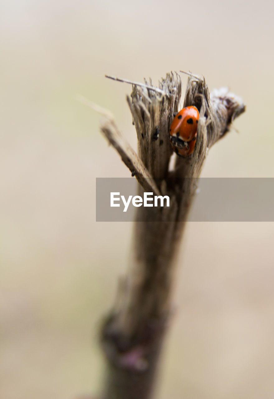 animal, animal wildlife, animal themes, animals in the wild, insect, invertebrate, one animal, close-up, selective focus, day, no people, nature, focus on foreground, outdoors, animal wing, plant, animal body part, beetle, zoology, animal eye, animal head