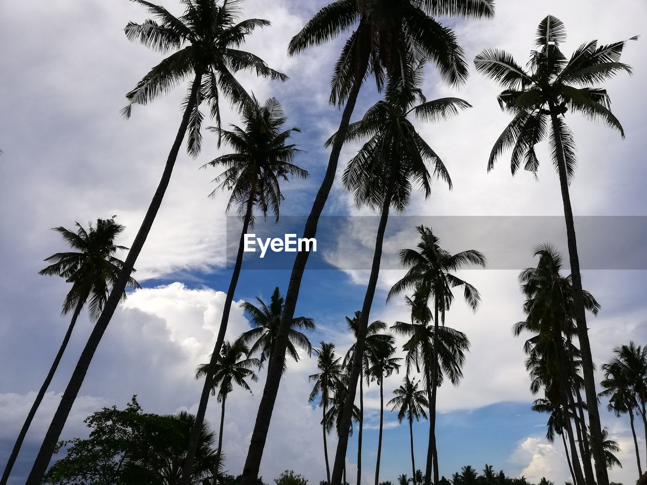 sky, tree, palm tree, tropical climate, plant, cloud - sky, beauty in nature, growth, low angle view, scenics - nature, silhouette, coconut palm tree, tranquility, tall - high, nature, tranquil scene, tree trunk, no people, trunk, outdoors, tropical tree, palm leaf
