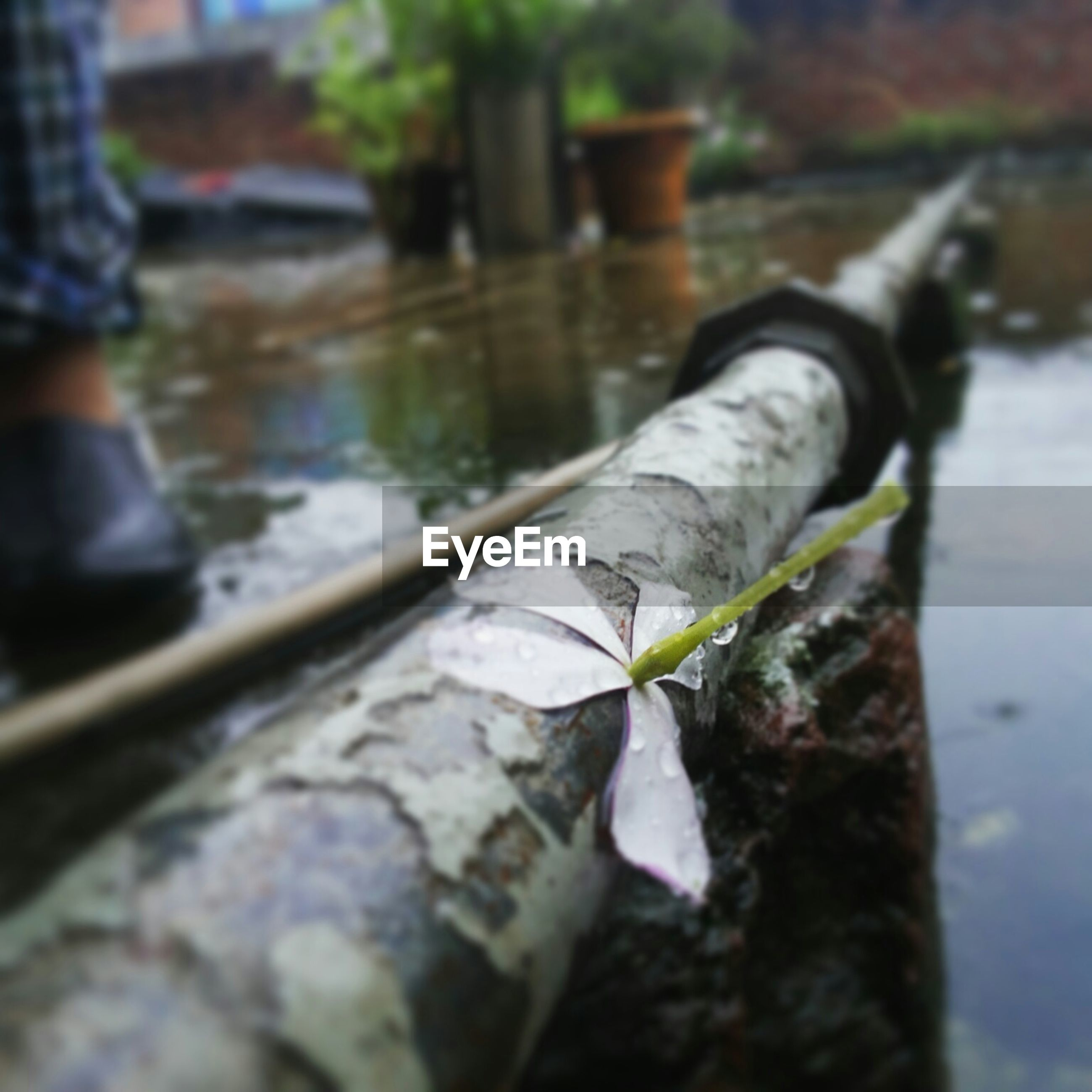 water, focus on foreground, reflection, selective focus, close-up, river, lake, day, outdoors, nature, part of, low section, shoe, wood - material, pond, leaf, men