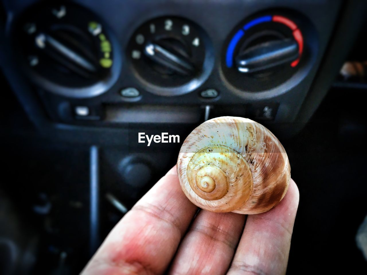 Cropped Hand Of Man Holding Shell In Car