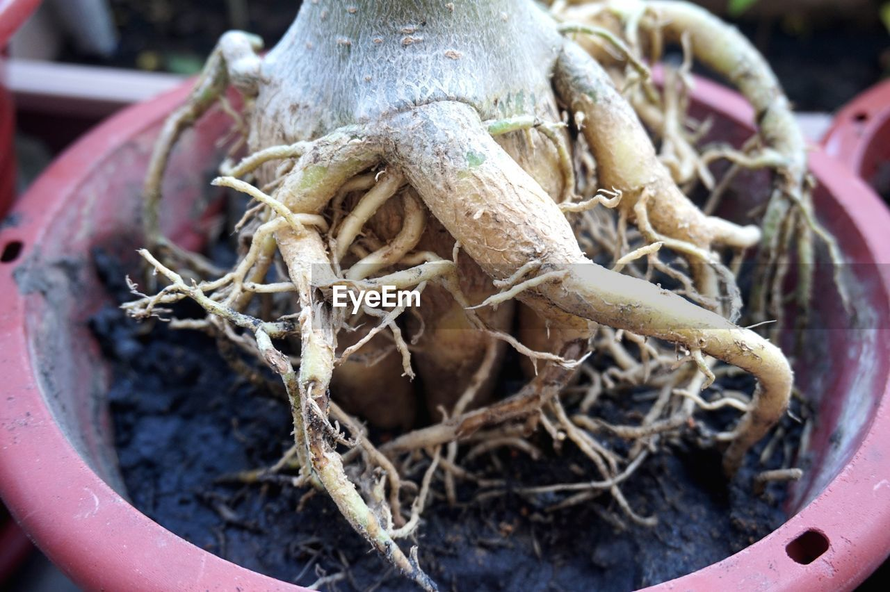 HIGH ANGLE VIEW OF CRAB ON POTTED PLANT