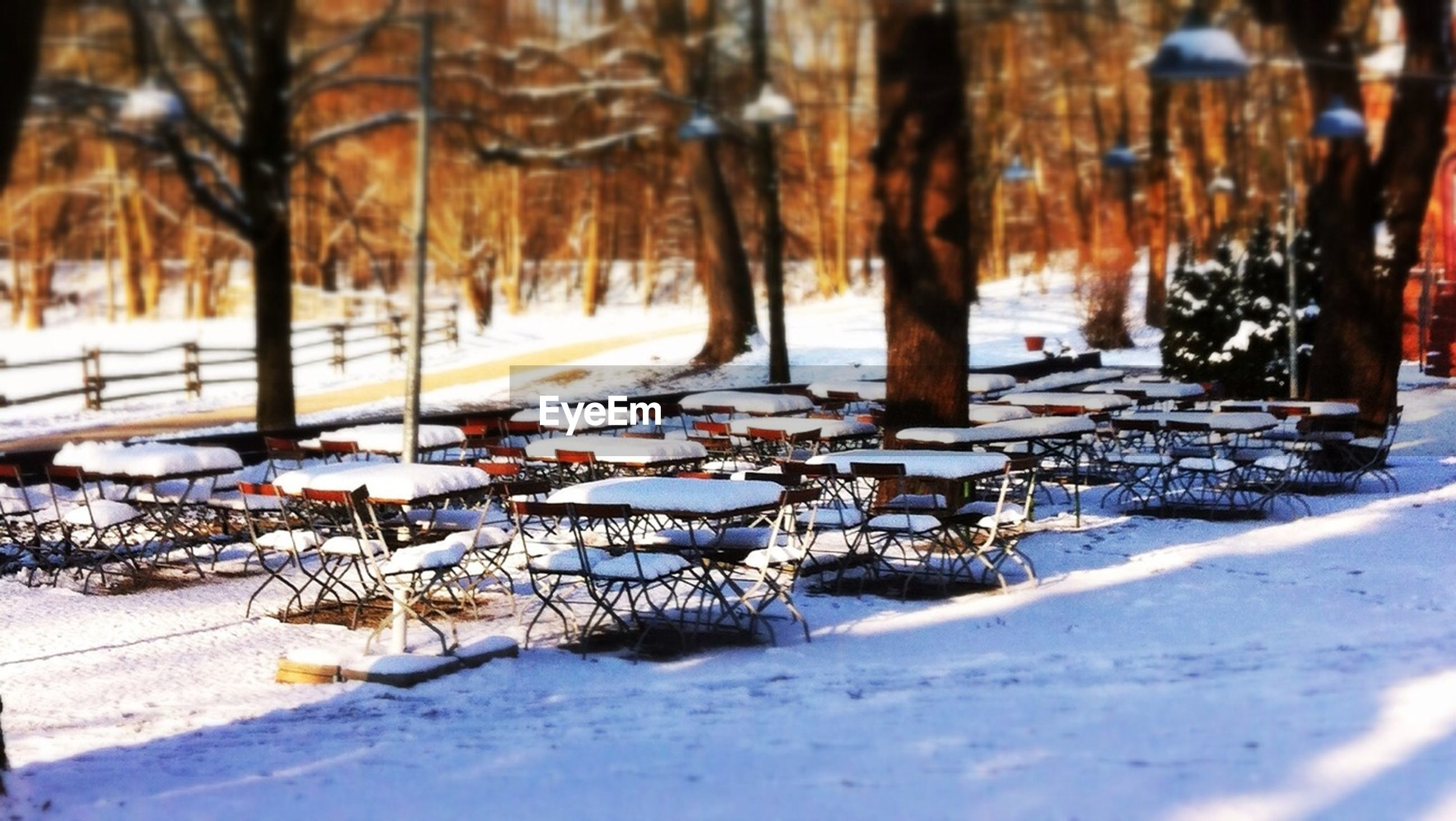 snow, winter, cold temperature, season, weather, covering, tree, frozen, covered, nature, chair, bench, absence, empty, in a row, white color, outdoors, day, tree trunk, tranquility