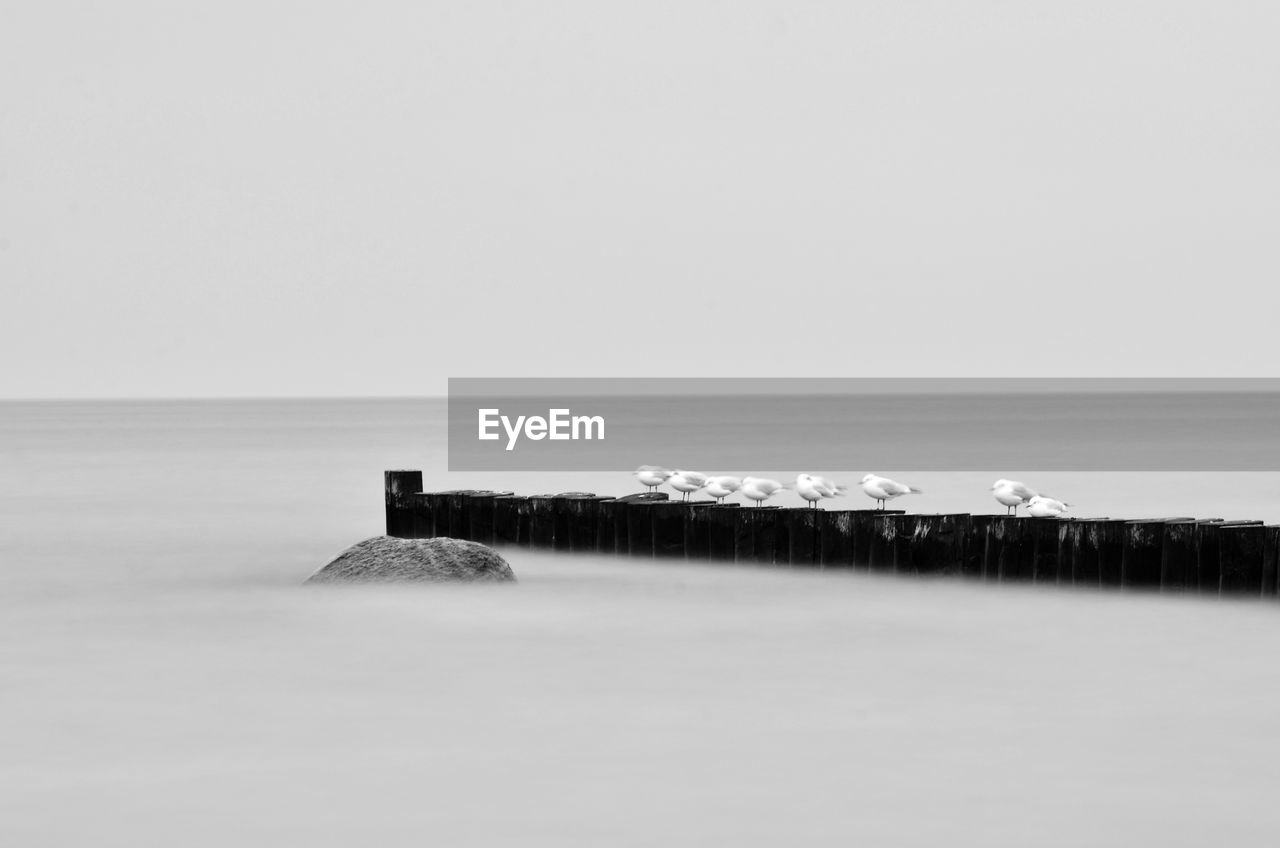 water, horizon, sea, sky, horizon over water, copy space, scenics - nature, beauty in nature, tranquil scene, tranquility, nature, land, no people, clear sky, idyllic, waterfront, day, non-urban scene, beach, outdoors, groyne