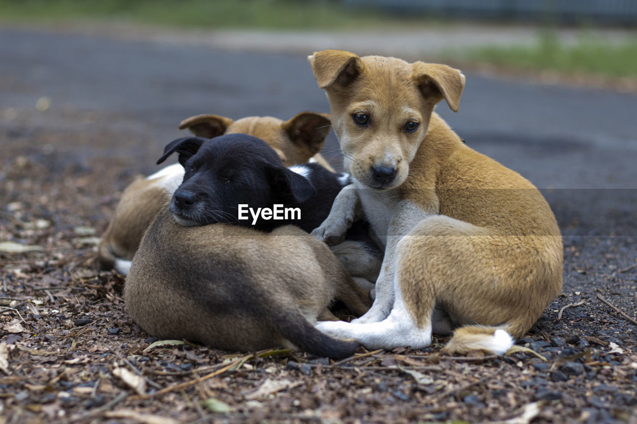 PORTRAIT OF DOGS SITTING ON GROUND
