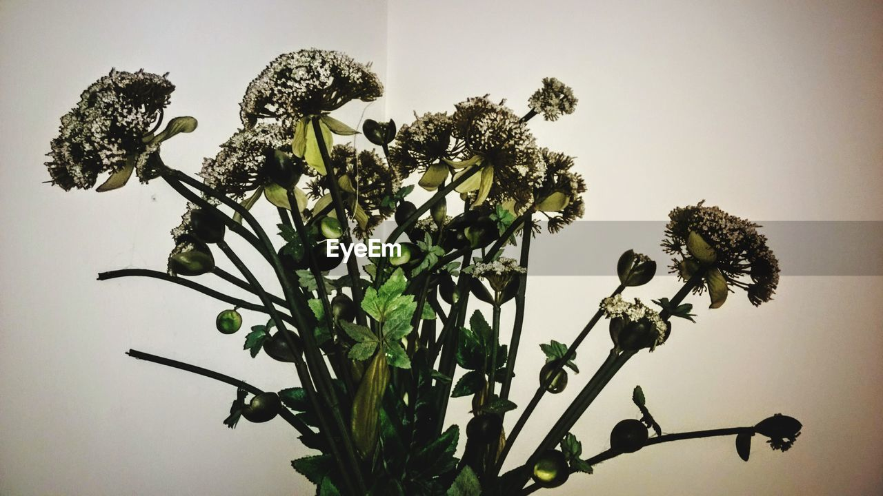 plant, growth, flower, flowering plant, no people, nature, indoors, freshness, close-up, beauty in nature, plant part, fragility, leaf, vulnerability, plant stem, day, herb, studio shot, tree, flower head, flower arrangement
