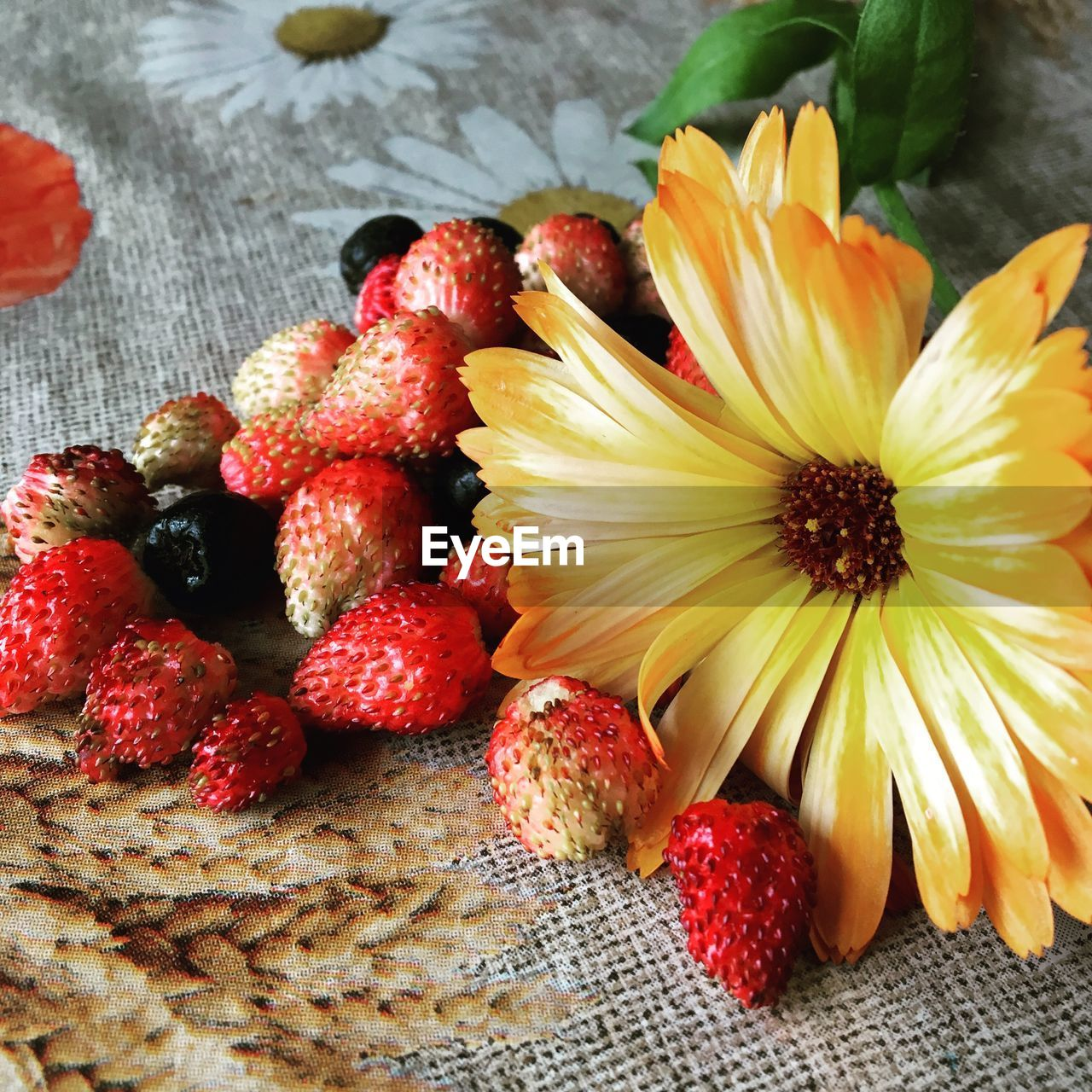 freshness, berry fruit, food, food and drink, close-up, healthy eating, fruit, flowering plant, flower, strawberry, no people, red, wellbeing, vulnerability, high angle view, fragility, indoors, still life, table, raspberry, flower head, ripe