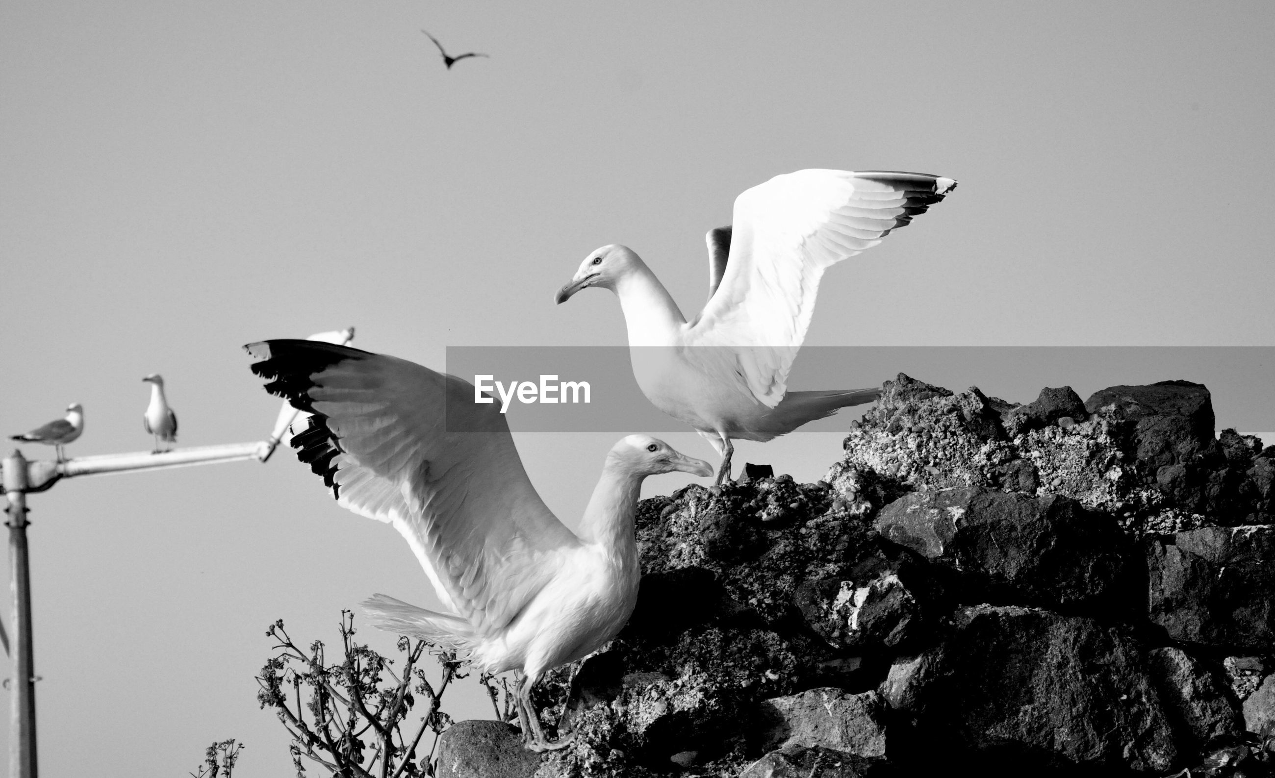 Close-up of seagulls perching on rocks against clear sky