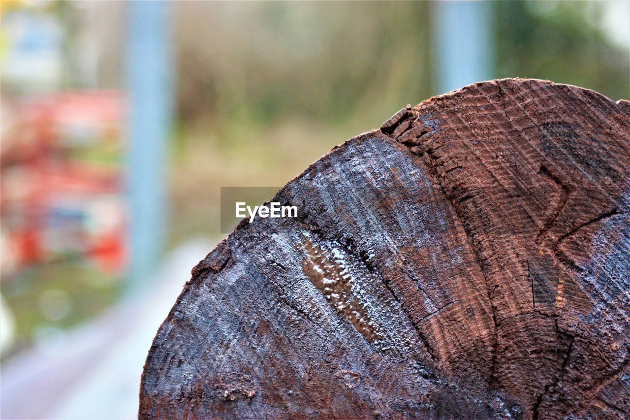 deforestation, lumber industry, log, tree ring, environmental issues, close-up, tree stump, environmental damage, textured, timber, day, wood - material, no people, nature, focus on foreground, outdoors, forestry industry, woodpile, axe
