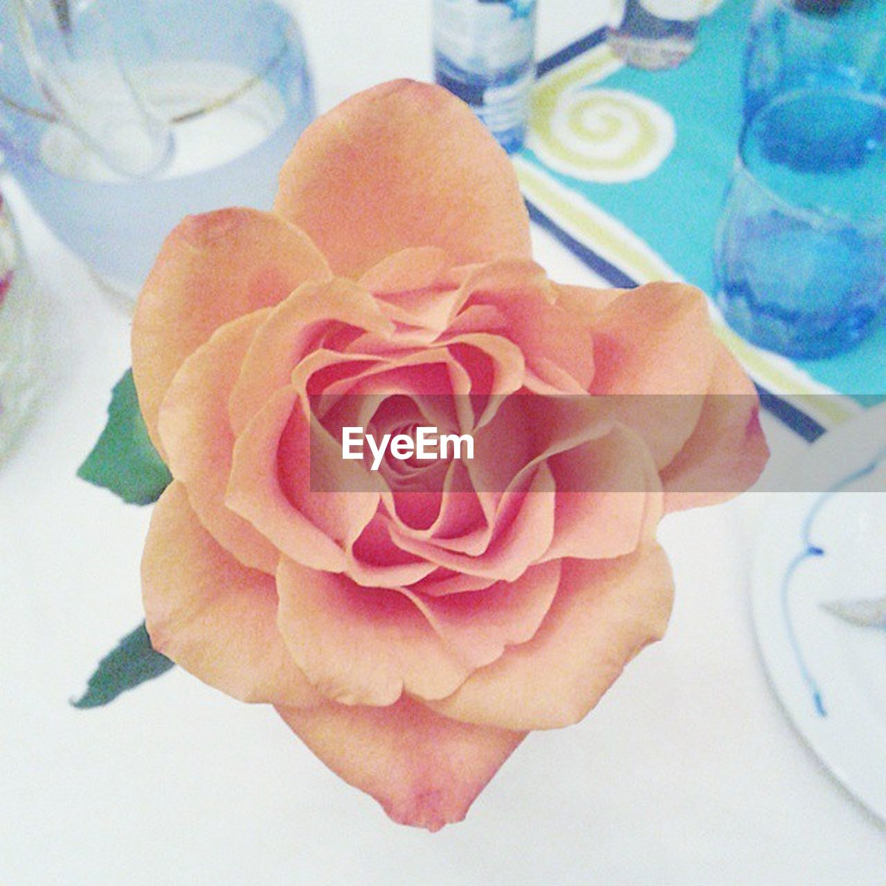 flower, petal, fragility, close-up, flower head, no people, indoors, nature, freshness, beauty in nature, day