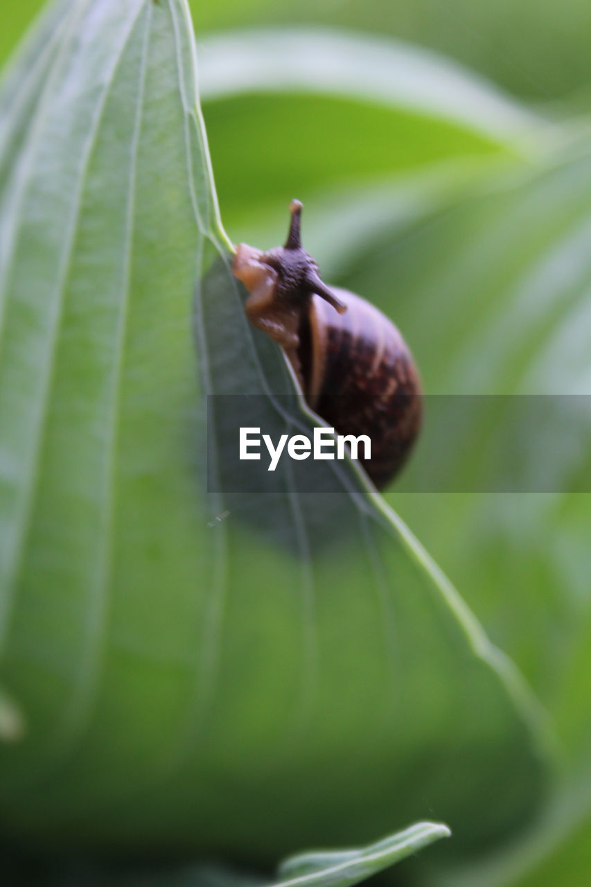 invertebrate, plant part, green color, close-up, leaf, animal, insect, animal themes, animal wildlife, animals in the wild, selective focus, one animal, plant, mollusk, no people, growth, nature, gastropod, day, snail, outdoors