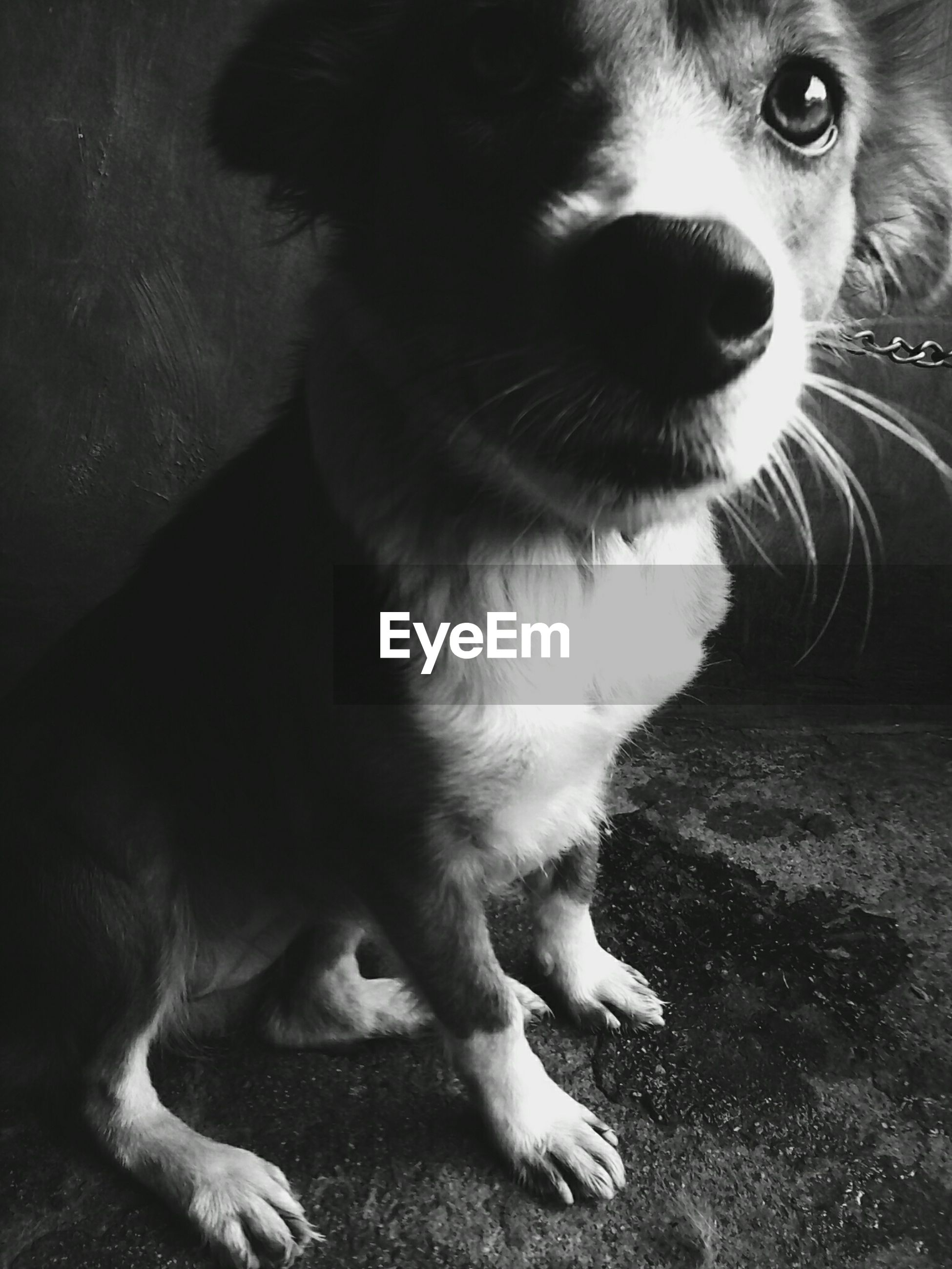 animal themes, domestic animals, pets, one animal, looking away, feline, cat, domestic cat, mammal, close-up, whisker, animal head, curiosity, zoology, alertness, dog, carnivora, front view, animal nose, animal, whiskers, animal eye, snout, pampered pets, loyalty, animal hair