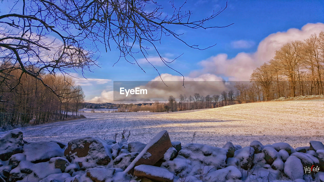 winter, cold temperature, snow, sky, bare tree, nature, tree, tranquility, tranquil scene, no people, beauty in nature, outdoors, cloud - sky, scenics, landscape, day